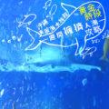 2019【沖繩 美麗海水族館】詳盡分析攻略,避開擁擠人潮的黃金時段