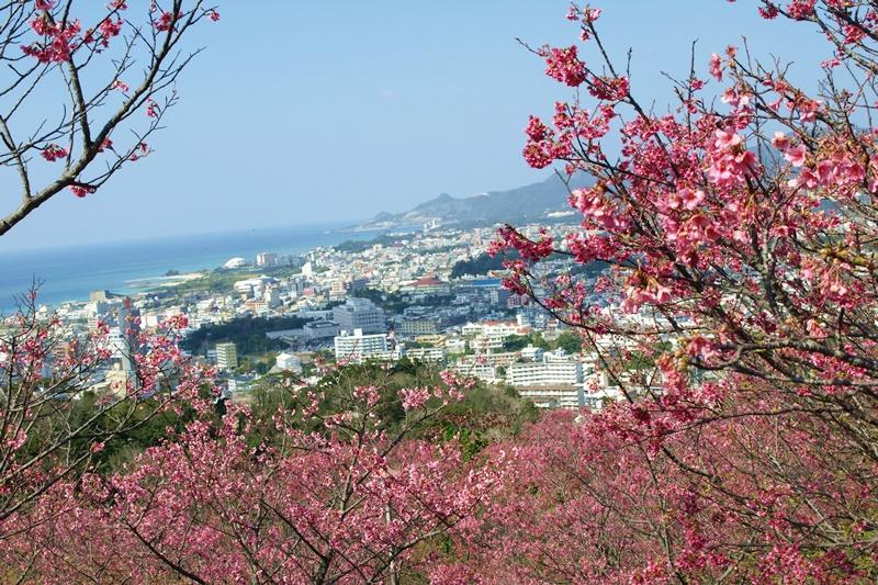 【2019】沖繩賞櫻攻略,嚴選6處|名護櫻花祭