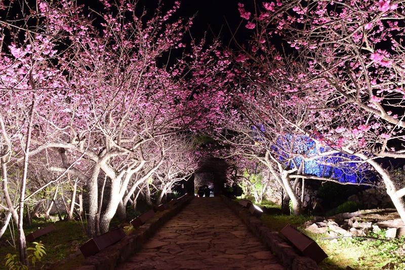 【2019】沖繩賞櫻攻略,嚴選6處|今歸仁城跡櫻花祭