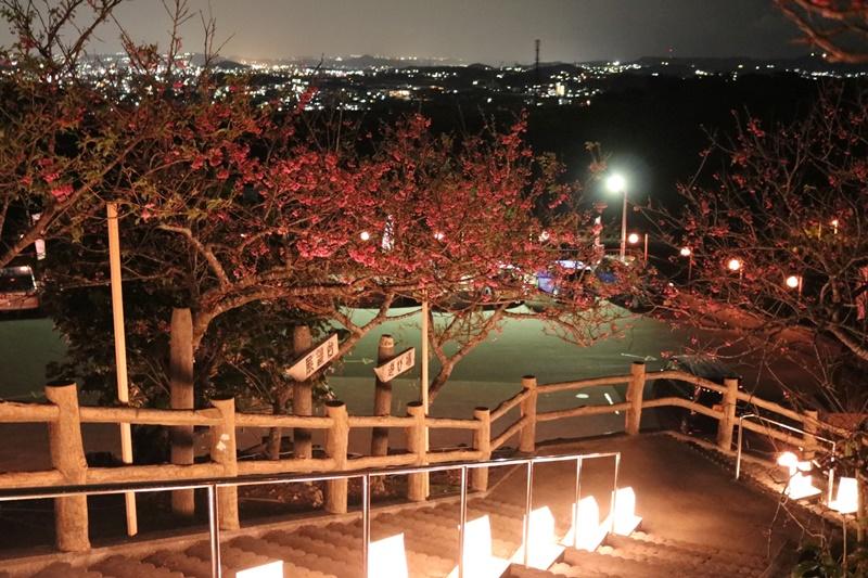 【2019】沖繩賞櫻攻略,嚴選6處|八重瀨櫻花祭